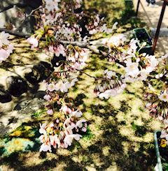 「Spring is in the air(´ω`)」